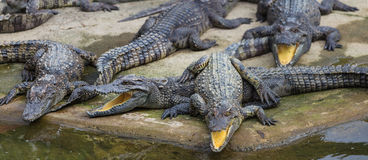 Water bodies on the Crocodile Farm in Dalat. Stock Photography