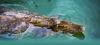 Water bodies on the Crocodile Farm in Dalat. Stock Photos