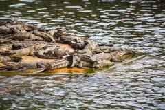 Water bodies on the Crocodile Farm in Dalat. Stock Photo