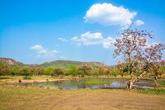 Water body in ranthambore Stock Photography