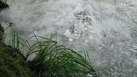 Water boils in a river, lake or swamp. stock footage