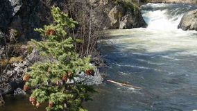 Water at the bottom of a cascade in the rocky mountains. Whitewater at the base of a small waterfall as seen in a forest in the yukon territories stock video footage