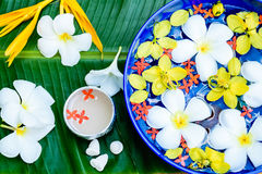 Water in bowl Songkran festival in Thailand. Water in bowl with many flower, Songkran festival in Thailand stock photography