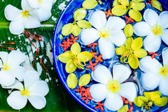 Water in bowl  Songkran festival in Thailand. Water in bowl with many flower, Songkran festival in Thailand Stock Photos
