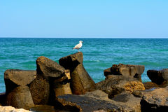 Water break. A seagull behind a water break with the idyllic scene of the Black Sea behind it royalty free stock photos