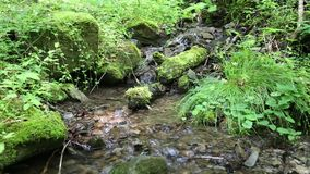 Water from brook in forest. Water from beautiful small brook in forest stock video