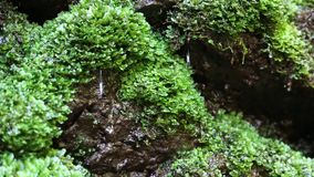 Water from brook in forest. Water from beautiful small brook in forest stock video footage
