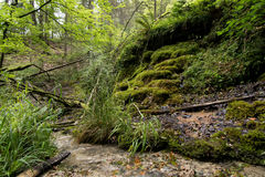 Water brook Stock Photo