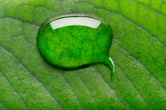 Water bubble talk. On green leaf background Royalty Free Stock Images