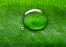 Water bubble talk. On green leaf background Stock Photo