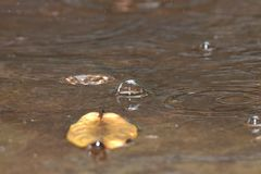 Water bubbles from raindrops royalty free stock image