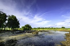 Water buffalo in mud. And blue sky Royalty Free Stock Images