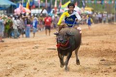 Water buffalo racing in Pattaya, Thailand. PATTAYA - AUGUST 17: Participant at the Buffalo Racing Festival of Nong Prue City at Mab Prachan Reservoir in Pattaya Stock Image