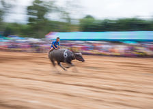 Water buffalo racing in Pattaya, Thailand. PATTAYA - AUGUST 17: Young boy competing at the Buffalo Racing Festival of Nong Prue City at Mab Prachan Reservoir in Stock Image