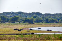 Water buffalos are laying in a fascinating landscape in the Yala Nationalpark Stock Photo