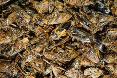 Water bugs or insect fried Stock Images