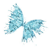 Water butterfly isolated on white background Royalty Free Stock Images