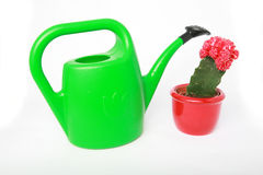 Water can and cactus isolated Royalty Free Stock Photos