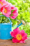 Water can in garden Royalty Free Stock Image