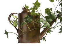 Water can and vines Royalty Free Stock Images
