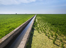 Water Canal Between Paddy Fields. Landscape of the rice fields located near Valencia (Spain), using a water canal as a vanishing point Stock Photography