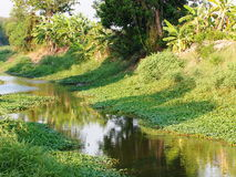 Water canal surrounding with green tropical environment Royalty Free Stock Photos