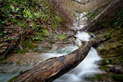 Water cascade. In the forest Stock Photo