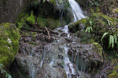 Water2. Water cascade jump in incontaminated nature Stock Image