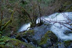 Water cascades over the edge of a waterfall in the dim forest light. Royalty Free Stock Image