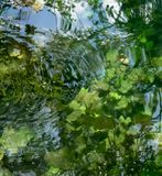 Cenote water Royalty Free Stock Photography