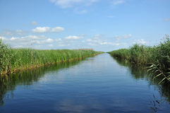 Water chanel in the Danube delta Stock Images