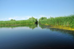 Water chanel in the Danube delta, Romania Stock Photography