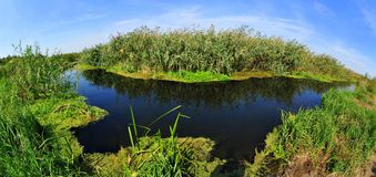 Water channel of Danube delta Royalty Free Stock Photos