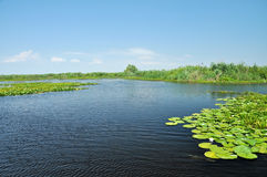 Water channel in the Danube delta Royalty Free Stock Image