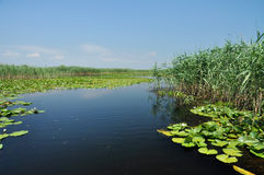 Water channel in the Danube delta and swamp vegetation Royalty Free Stock Photo