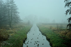 Water channel among the meadows and birds. Royalty Free Stock Photos