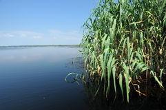 Water channel, river in Danube delta Stock Photos