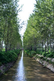 Water channel scenery in the forest Stock Image