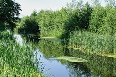 Water channel in the summer. stock photo