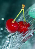 Water on cherries Stock Photos