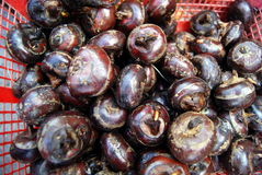 Water chestnut Royalty Free Stock Images