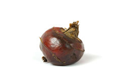 Water chestnut Royalty Free Stock Photos