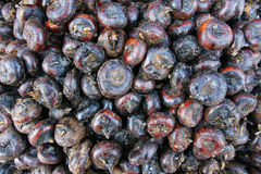 Water chestnut Royalty Free Stock Photo