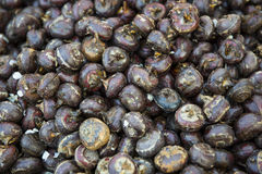 Water chestnut. The background of water chestnut tubers . Scientific name: eleocharis tuberosa royalty free stock photos