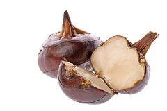 Water Chestnuts. Isolated macro image of water chestnuts royalty free stock photos