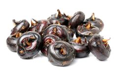 Water chestnuts. On a white background stock photo