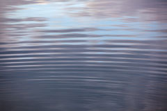 Water circles in the lake Stock Image