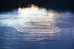 Water circles in the lake Royalty Free Stock Images