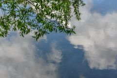 Water clouds sky branches willow reflection. Abstract natural background with willow branches above the water in the lake, circles on the water and reflections royalty free stock images