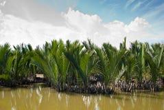 Water coconut tree. Mekong Delta, Vietnam Royalty Free Stock Photo